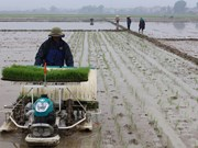 Experts: technology road map urgent for Vietnam's rice