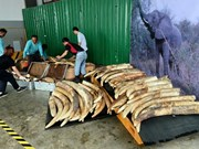 Singapore destroys tusks worth 9 million USD