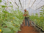 New Zealand funded vegetable project benefits Binh Dinh
