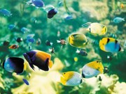 HCM City: Ornamental fish exports bring home 7 million USD
