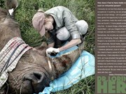 Advertising agency wins creativity awards for rhino saving ad
