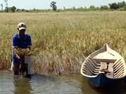 ADB helps Vietnam fight drought, saline intrusion