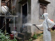 Dak Lak: Dengue fever patients surge in rainy season