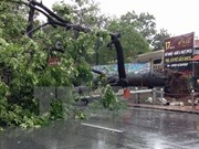 Typhoon causes havoc in northern localities