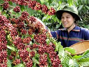 Vietnam Coffee Day to open in December