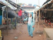 Central Highlands step up efforts to curb dengue fever