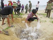 Rice aid comes to affected fishermen in Quang Tri