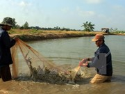 Localities urged to boost breeding shrimp production