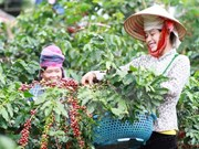 Dak Lak targets sustainable coffee production