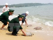 Tay Ninh seizes 66 turtles smuggled from Cambodia