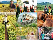 Vietnam's MDG implementation over 15 years reviewed