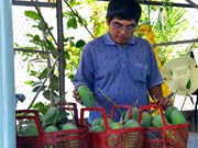 Japan helps boost Dong Nai's mangoes export