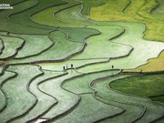 Terrace rice paddy photo among the best in Nat Geo contest