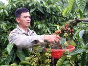 Agro-forestry-fishery exports down 5 percent in nine months