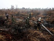 Indonesia deploys 25 aircraft to put out forest fires