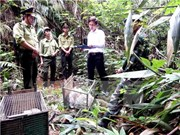 Huge wild animal transport discovered in Quang Binh