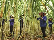 Vietnam, Australia sign deal to exchange sugar cane varieties