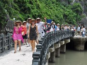 Foreign tourist numbers start to recover