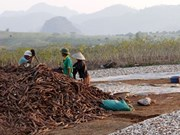 Vietnam's ethanol industry faces crisis