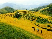 National week honours Mu Cang Chai terraced paddy fields