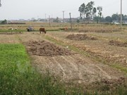 Drought forces crop switch in central Vietnam