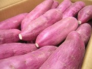 Singapore: Sweet potatoes grown in Vietnam are safe