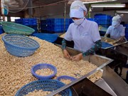 Vietnam's cashew exports surge in January