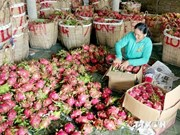 Food safety crucial for Vietnamese produce's reputation abroad