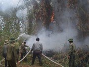 U Minh Ha forest faces fire threat as drought continues