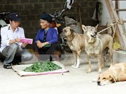 Vietnam responses to animal health and zoonoses