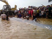 Dead whale buried in Nghe An