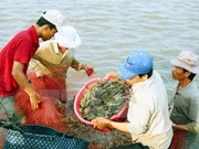 Bac Lieu plans to restructure fisheries sector