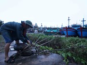 Northern Vietnam prepares for storm Mirinae