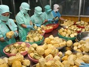 Vietnam's exports reach 96.83 billion USD in seven months