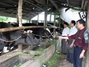Vietnam-Belgium agricultural education cooperation successful