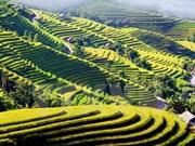 Hoang Su Phi cultural week opens in Ha Giang