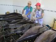 Tuna fishermen in Binh Dinh employ Japanese technologies