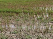 Big aid package approved to counter drought, saline intrusion