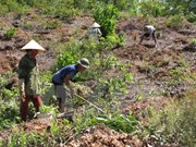 Thua Thien- Hue invests 1.3 million USD in afforestation