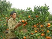 Farmers look for stable markets for their products
