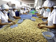 Cashew exports to reach 2.5 billion USD in 2015