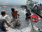 Vietnamese seafood industry moves to meet US new standards