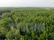 Millions in coastal areas benefit from mangrove forest