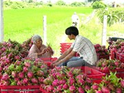 Tien Giang has three more GlobalGAP agricultural establishments