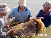 Ca Mau sees 20 pct drop in seafood export