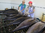 Tuna firms eye 8 percent export rise
