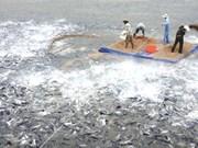 Three more fish breeding facilities earn Global Gap certificate