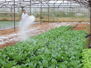 Japanese firms bring information technology to Vietnam's farms