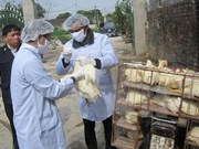 Health sector urges vigilance for bird flu outbreaks during Tet