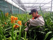 A worker tends to orchirds in Lam Dong